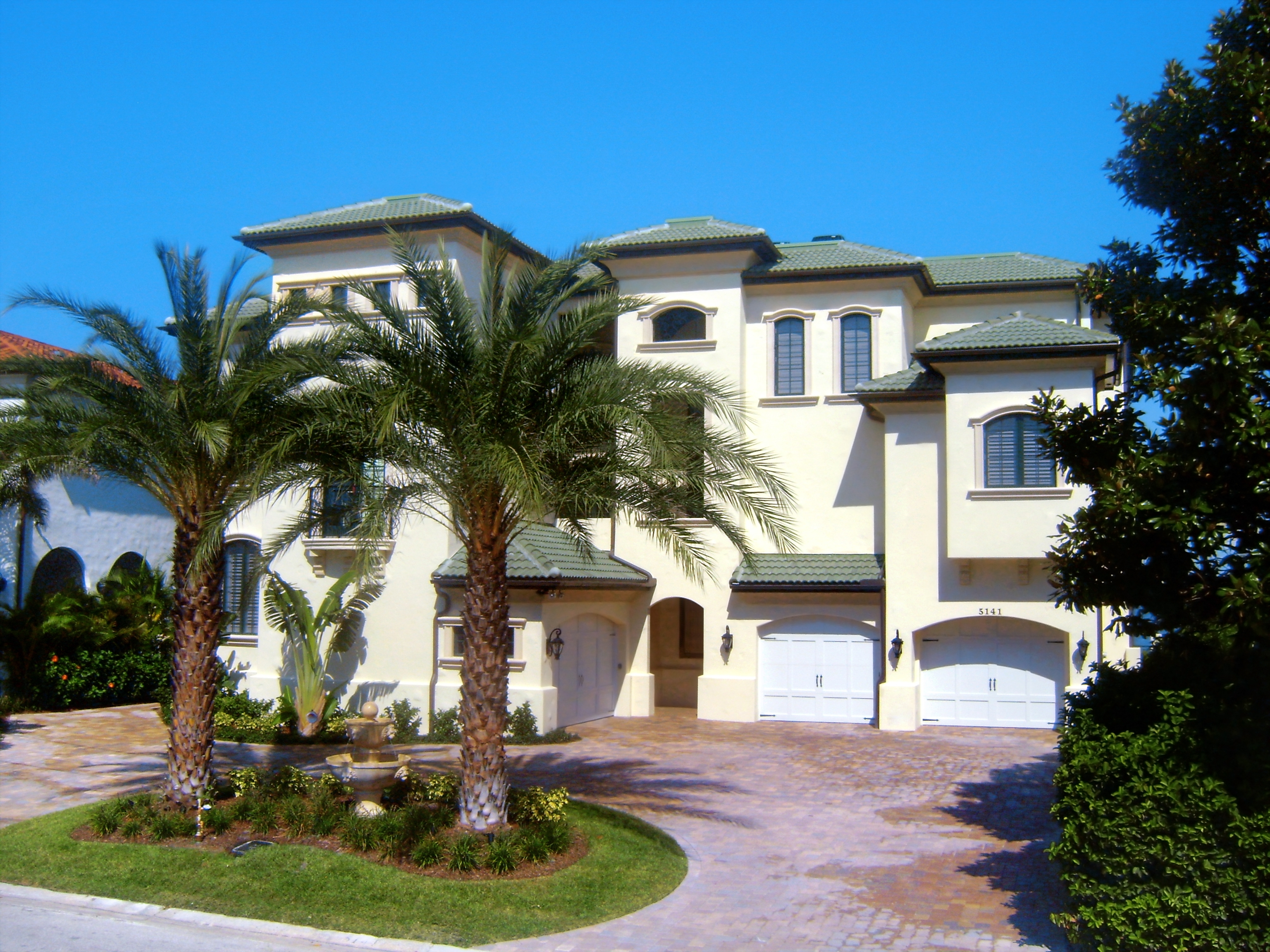 Buy Sylvester Palm Trees in Miami, Ft Lauderdale, Kendall