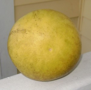 Duncan Grapefruit