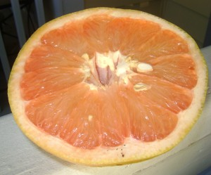 Inside the Ruby Red Grapefruit