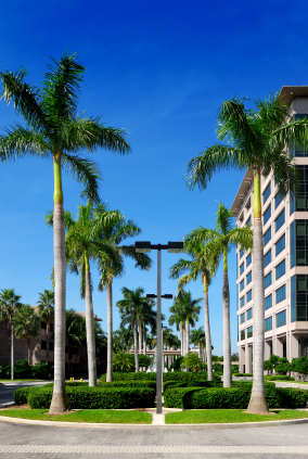 Buy Royal Palm Trees In Miami Ft Lauderdale Kendall